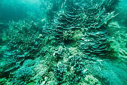"Corals at ""The Aquarium"" in Clerke Lagoon at the Rowley Shoals."