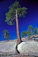 Joshua tree national park. USA