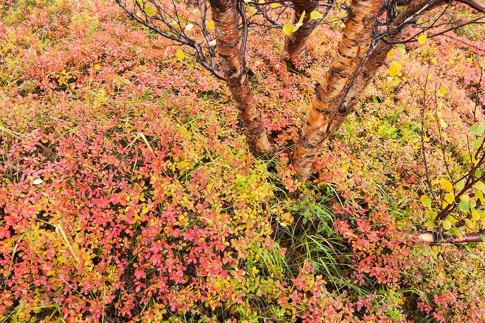 Autumn colours in Thingvellir, Iceland