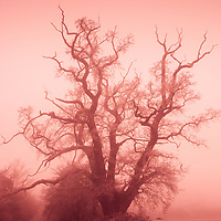 Winter in the countryside  with branches of an old oak tree in Suffolk England