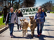 "14 APRIL 2019 - DES MOINES, IOWA: JEREMY ARNDT, leads his miniature donkey, Jill, and CORISSA ARNDT leads her miniature donkey, Junior, at the head of Palm Sunday procession for peace in Des Moines. About 200 people participated in an interdenominational  Palm Sunday procession calling for peace. The theme of the procession was ""To Love and Defend our Sacred Earth"" and it was sponsored by Des Moines Faith Committee for Peace.     PHOTO BY JACK KURTZ"