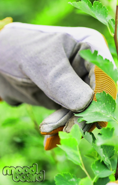 Close up of gardener wearing gloves while holding shovel in garden shop