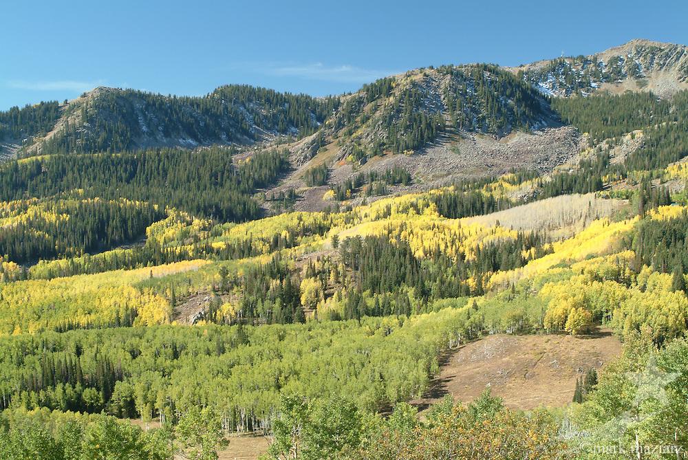 fall colors on Bonanza Flats, above Deer Valley, Utah USA
