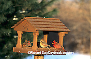 00585-00606  Northern Cardinals  & House Finches at feeder in winter Marion Co.  IL