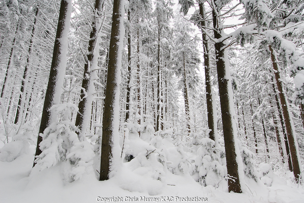 Winter trees, Highland Forest County Park, New York, USA.