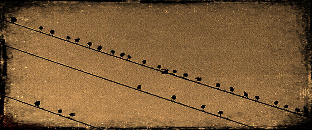 a flock of birds sitting on a wire
