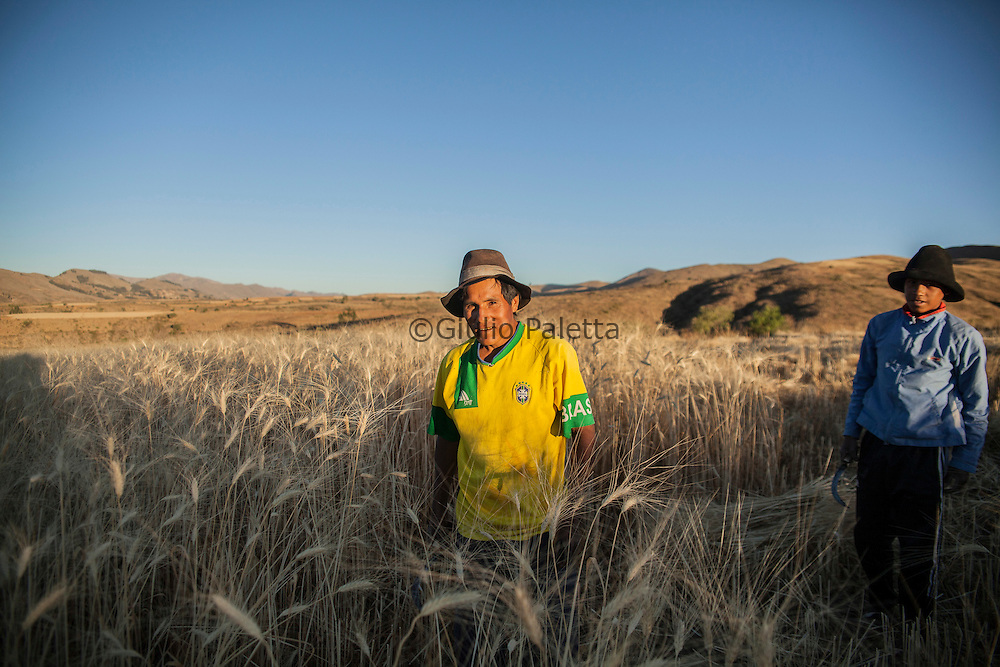Famer in the wheat fields near Anzaldo, in the Bolivian Andes