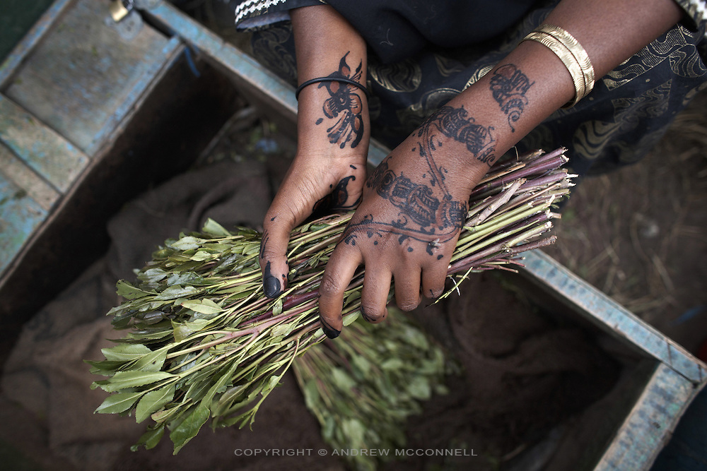 Khat is sold on the streets of Hargeisa, Somaliland. Khat is a national addiction in Somaliland and the source of many of the socioeconomic problems effecting the country..
