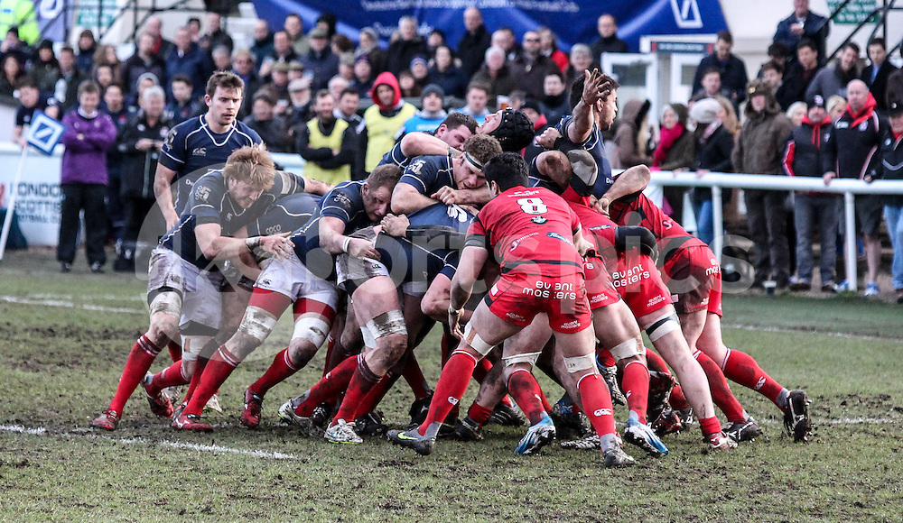 The London Scottish pack in action during the Green King IPA Championship match between London Scottish &amp; Moseley at Richmond, Greater London on 21st February 2015<br /> <br /> Photo: Ken Sparks | UK Sports Pics Ltd<br /> London Scottish v Moseley, Green King IPA Championship, 21st February 2015<br /> <br /> &copy; UK Sports Pics Ltd. FA Accredited. Football League Licence No:  FL14/15/P5700.Football Conference Licence No: PCONF 051/14 Tel +44(0)7968 045353. email ken@uksportspics.co.uk, 7 Leslie Park Road, East Croydon, Surrey CR0 6TN. Credit UK Sports Pics Ltd