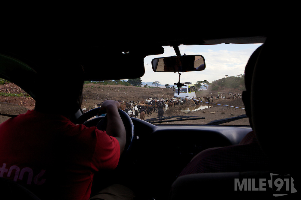 A view through the vehicle windscreen of goats on the dirt track.