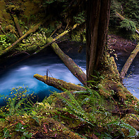 Verdant forest surrounds the deep blue waters by Koosah Falls in Central Oregon.