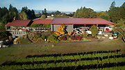 Bethel Heights harvest, Eola-Amity AVA, Willamette Valley, Oregon