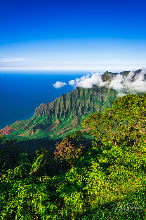 Kalalau Valley and the Na Pali Coast from Kalalau Lookout,  Kokee State Park, Kauai, Hawaii USA