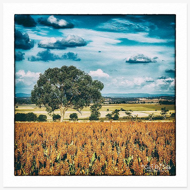 """Photo Art Greeting Card   New England Collection   Printed on lightly textured art paper stock, blank inside. White envelope included, packaged in sealed poly bag. Available online in mixed packs of 5 for $20 incl delivery. Click """"Add to Cart"""" to choose your own mix of any 5 images from this collection. [Dimensions: Card 123 x 123mm. Envelope 130 x 130mm]."""