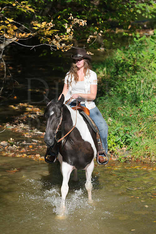 Woman riding a paint horse crossing shallow stream, horseback trail riding in summer, Pennsylvania, PA, USA.