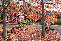 Hamilton House at Glendora Centennial Heritage Park During Peak Fall Foliage, Glendora, California