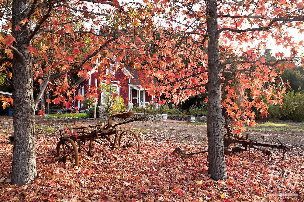 Hamilton House at Glendora Centennial Heritage Park During Peak Fall Foliage, Glendora, California