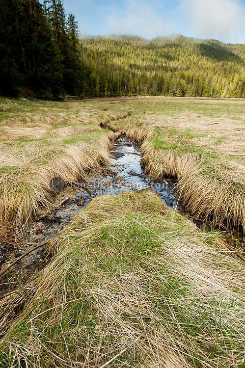 Small stream running through a grassy field in British Columbia.