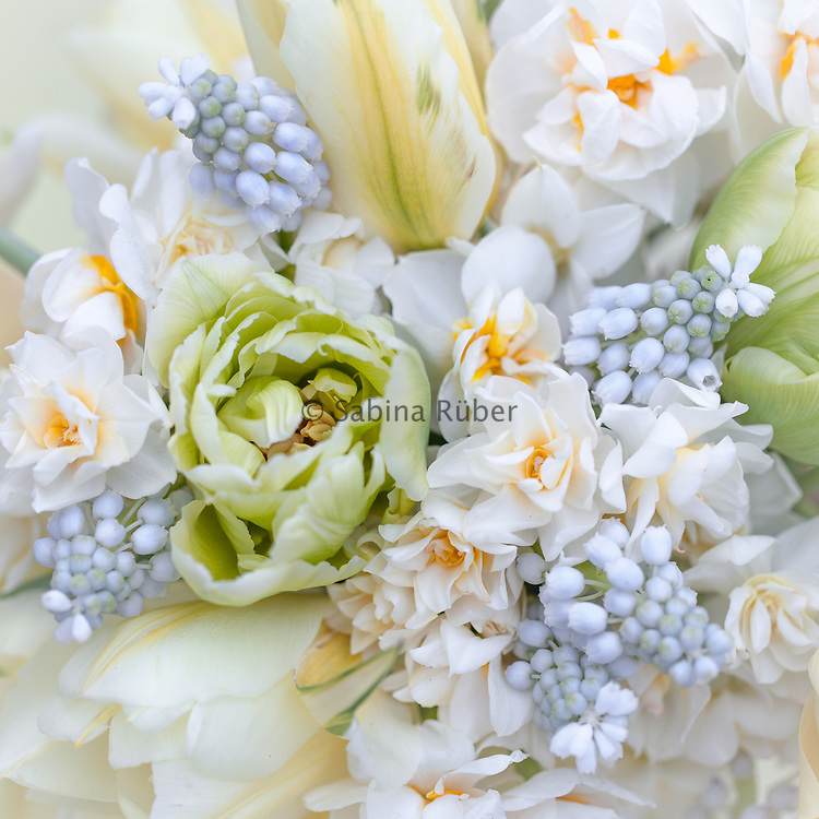 Flower arrangement with tulips 'Verona' and 'Exotic Emperor', narcissi 'Erlicheer', 'Bridal Crown' and muscari 'Lady Blue'.