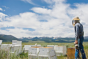 Honey is the truest taste of a landscape. Here surrounded by bees, beekeeper Dan Mudd of Salmon Valley Honey looks over the countryside  at the landscape his bees will turn into food.