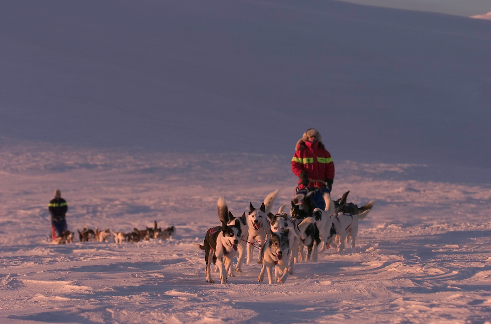 Dog sledding tour with The Silent Way, Vindelfjallen National Park, Vasterbotten, Lapland, Sweden. Ecotourism