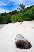 Log on beach - Pulau Redang, Malaysia