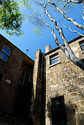 Trees reaching toward the sun from small courtyard. The Rocks, Sydney, Australia
