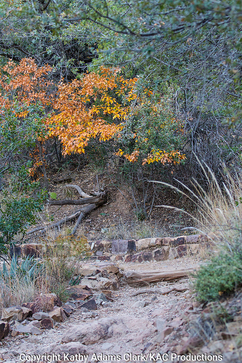 Oak leaves, autumn, Big Bend National Park, Chihuahuan Desert, west Texas