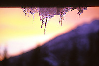 Icicles in December sunset