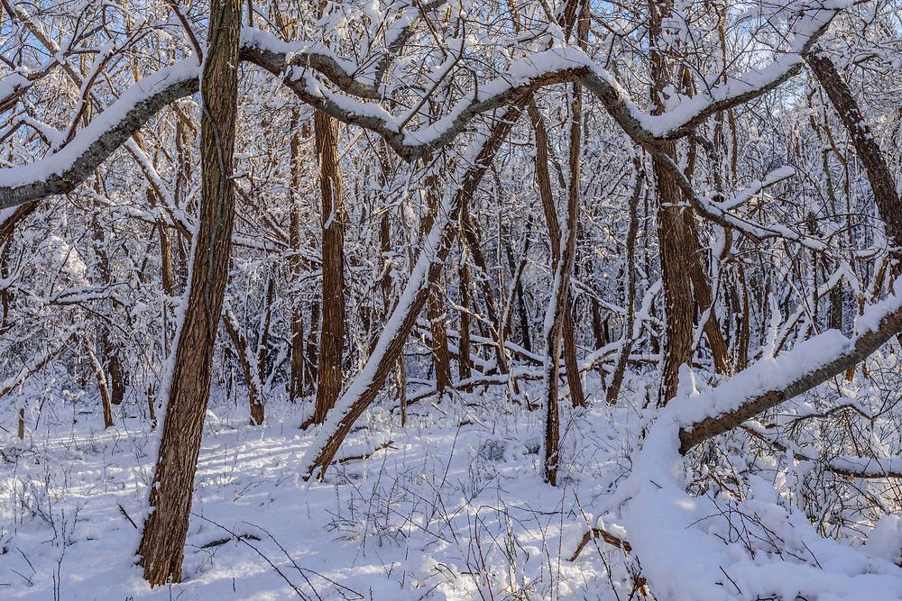 Maple Swamp County Park, Flanders, NY