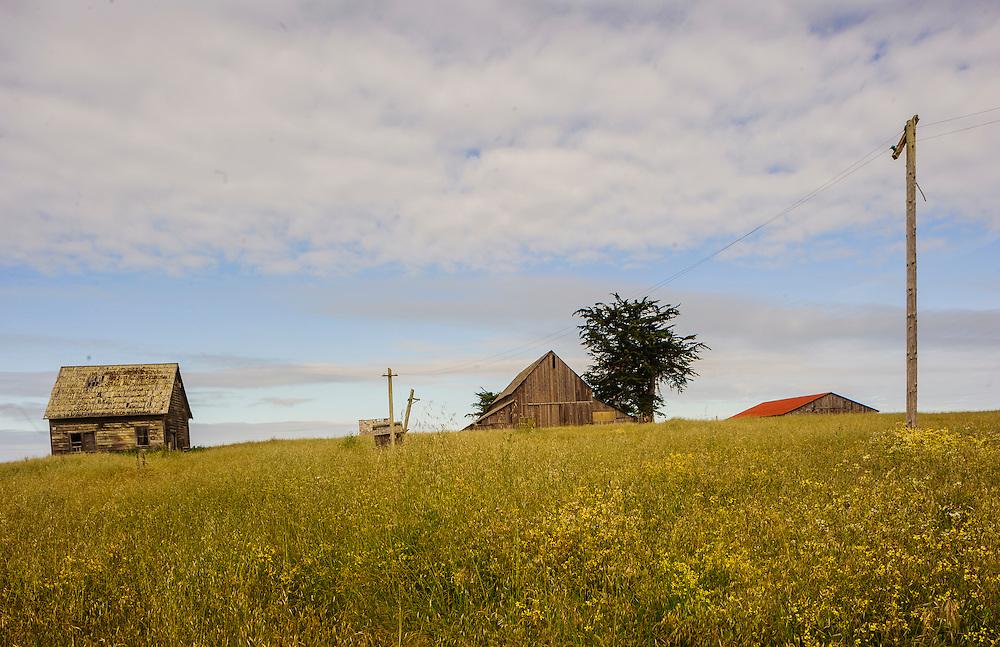 Abandoned Farm, Mendocino Coast, California