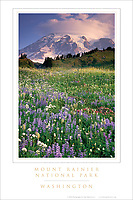 Mount Rainier National Park Poster