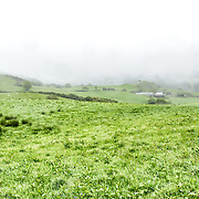 Mist shrouds the small hills of a farm in Snowdonia, Wales.