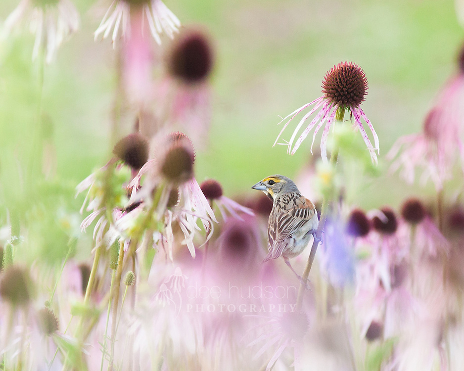 &quot;Clinging to Habitat.&quot; <br />