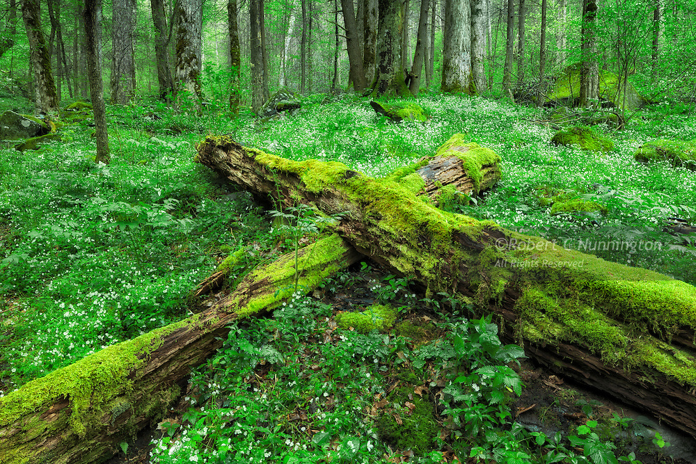 The Cove Hardwood environments in the Great Smoky Mountains National Park are fertile regions due to the humid and temperate conditions, together with rich soils,  and are ideal conditions for the regrowth of plant species. They typically contain abundant wildflower and moss species.