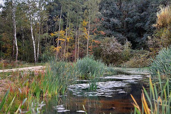 Nederland, Ubbergen, 22-10-2012Het was een dag met mooi herfstweer. Herfstbos. Waterplas.Foto: Flip Franssen/Hollandse Hoogte