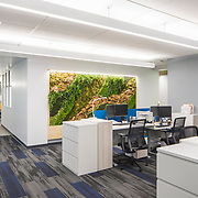 Ferguson Paper Baldwin Architects have created a bright, user-friendly research lab for Novartis Navigate in Carlsbad, California