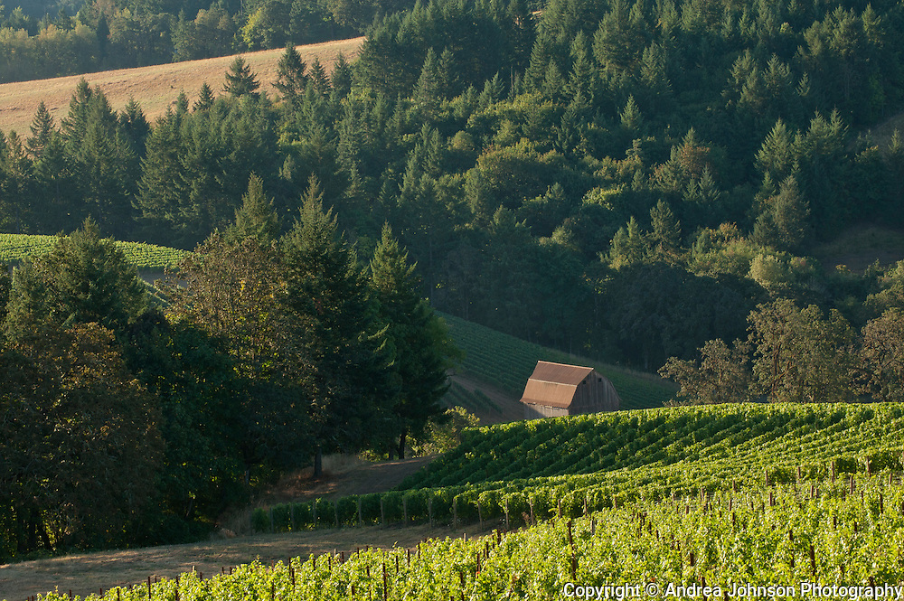 Colene Clemens winery & estate vineyard, Yamhill-Carlton AVA, Willamette Valley, Oregon
