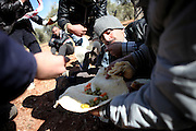 Soldiers of the Free Syrian Army eat some bread and olives while hiding in an olive orchad. On 22. February the syrian army attacked the village of Kureen, Province of Idlib, Syria. Kureen was among the first villages in the northwest of Syria controlled by the opposition. Some villagers and members of the defence units escaped to surrounding olive orchards, when the attack begun in the early morning. A majority of the inhabitants didn´t manage to escape. The heavy shelling lasts 7 houres. Soldiers searched all houses, burnt some of them down, loote shops, stole cars and furniture. About 60 motorcycles were burnt down. Tanks demolished several houses. 6 men were executed. One woman died as a result of an heart attack.