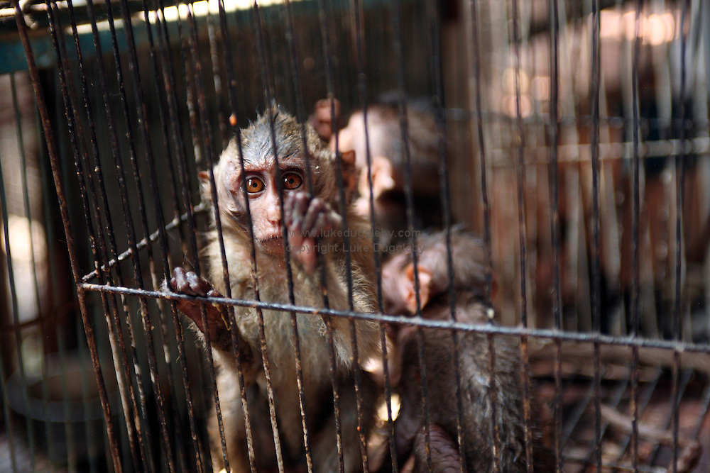 Caged baby monkeys for sale at Jakarta's bird market.