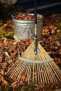 Rake and bucket of leaves