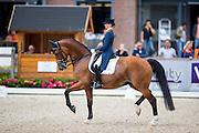 Marieke van der Putten - Zingaro Apple<br /> Nederlands Kampioenschap 2016<br /> © DigiShots