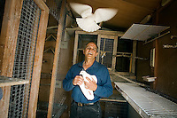 JEROME A. POLLOS/Press..Dominic Daddato raises white homing pigeons at his home in Post Falls, a hobby that first gained his interest when he was growing up in Milwaukee.