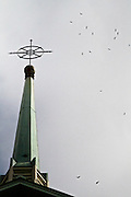 Birds fly around the steeple of Cedar Park United Church of Canada, Montreal Quebec.