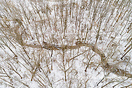 63877-01320 Aerial view of forest after snowfall in winter Marion Co. IL