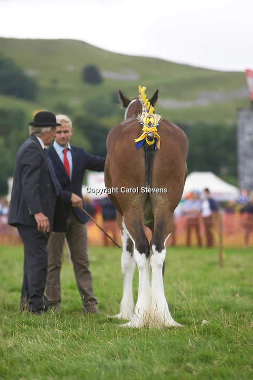 Paul Bedford's Yearling, Rosemoore Sapphire<br /> Winner Yearling Class<br /> Reserve Junior Champion