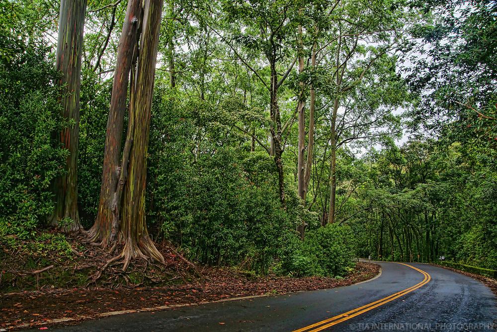 Road to Hana, Maui (#2)