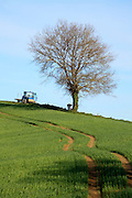 tree being cut down in rural agricultural landscape