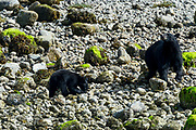 Wildlife photography from Archipeligo Wildlife Cruise, British Columbia, Canada