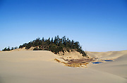 Tree island and deflation plain with ponds in the Umpqua Dunes; Oregon Dunes National Recreation Area, Oregon coast.